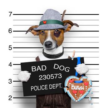 Polizistenwitze - Hund Verbrecher